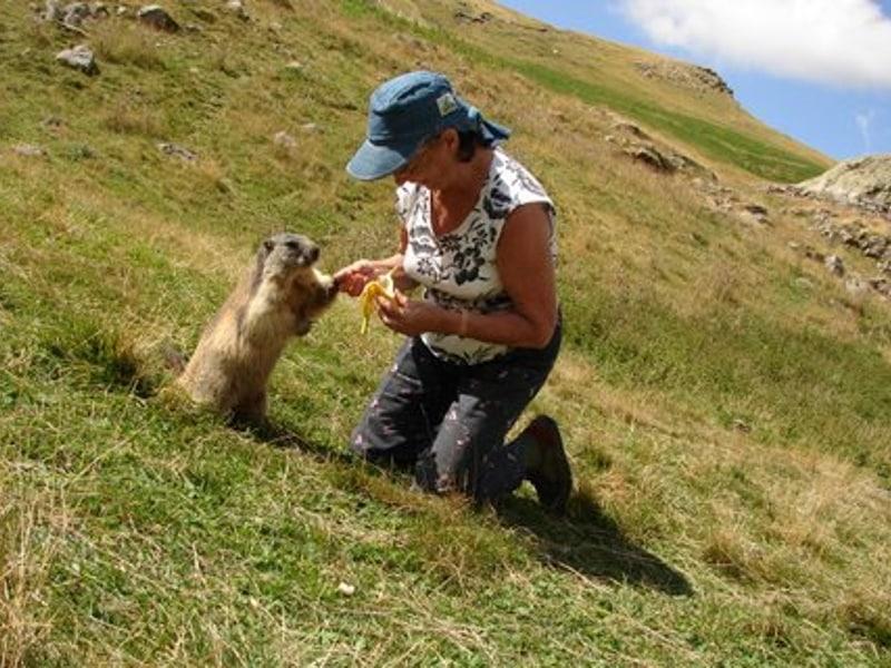 Rencontre avec les marmottes lors d'une randonnée dans le Parc National des Ecrins au départ de Prapic